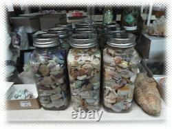 Big Jar Australian Opal Rough With Fossil Shell Pieces Mixed Grades Lot