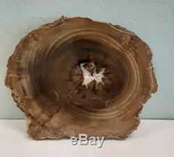 Oregon Petrified Wood Slab (10x8) Beautiful Piece with Druzy Quartz Center+++