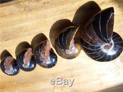 5 Morceaux De Spécimen D'ammonite Fossile De Nautilus En Voie De Guérison