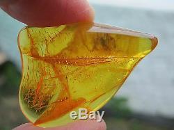 Cristal Ambré, Insecte Brut, Pièce Naturelle Non Traitée Lituanie 5g 4cm
