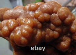 Cristaux Botryoidal Orange Aragonite Sur Matrix De Perú. Pièce Maîtresse