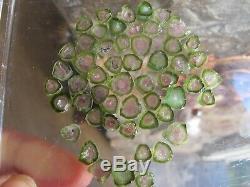 Minuscules Morceaux De Cristal De Tourmaline Melon D 'afghanistan Afghanistan 53 Articles 64c Offre Spéciale
