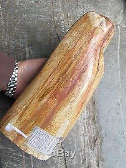 Pétrifié Bois Fossilisé Piece Poli Indonésie 23x10x9 CM 3.779 Kilos