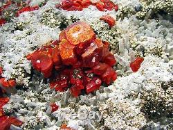 Realgar Rouge Carmin, Brillant Pyrite, Selenite & Quartz Fromperu. Piece Musée